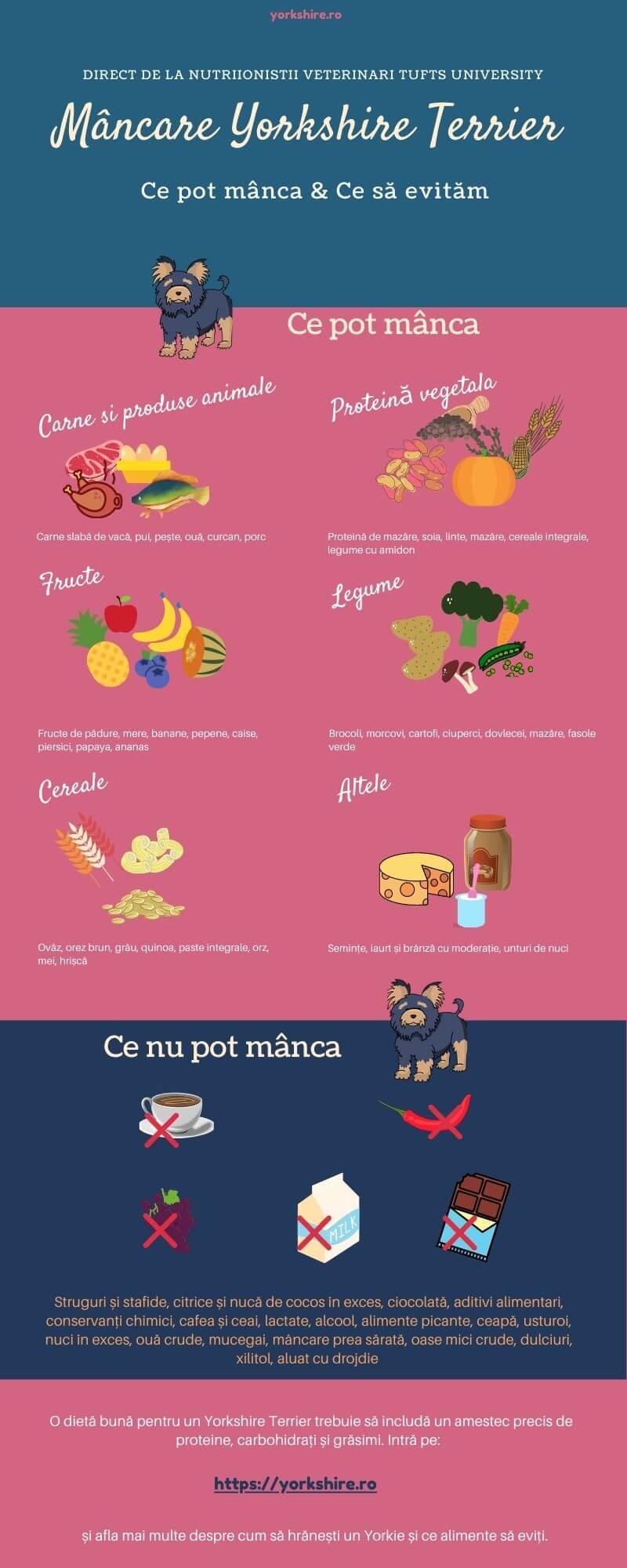 Infografic alimentatie Yorkshire Terrier